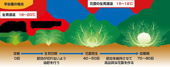 育成スケジュール02