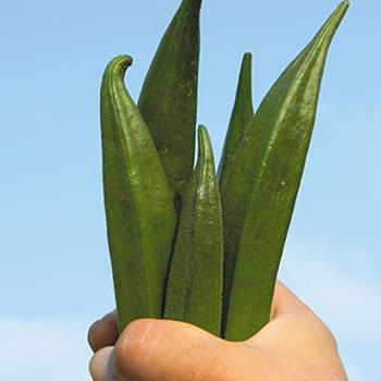 オクラ収穫イメージ