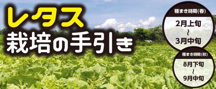 レタス栽培の手引き