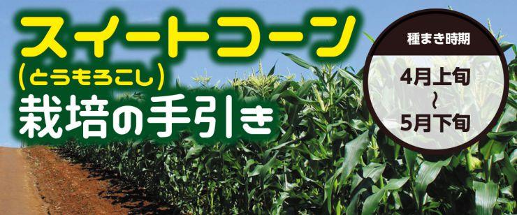 スイートコーン栽培の手引き
