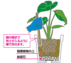 用土を入れ植え付ける