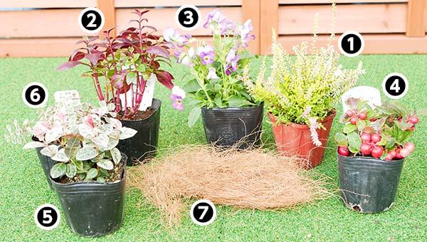 寄せ植えの使用植物