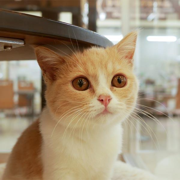 ネコちゃん写真