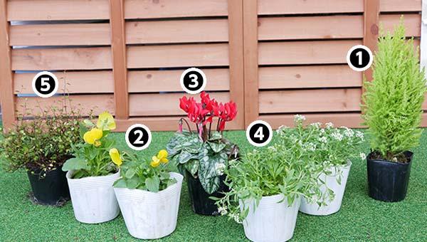 寄せ植え使用植物