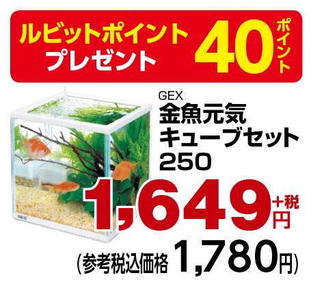 金魚元気キューブセット250