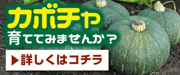 の 方法 かぼちゃ 栽培