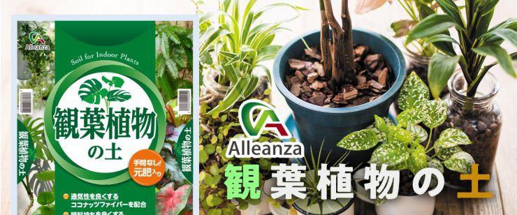 観賞植物の土