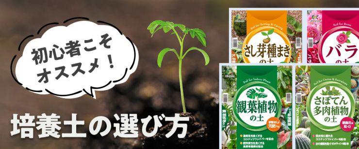 培養土の選び方