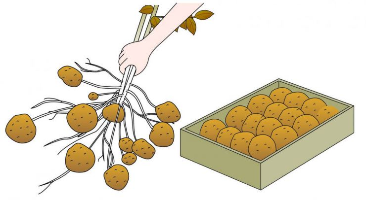 収穫と貯蔵