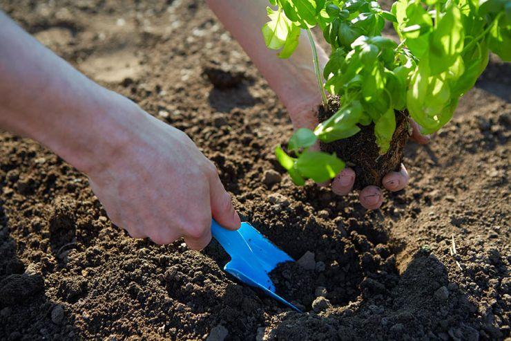 スコップで苗を植えるイメージ