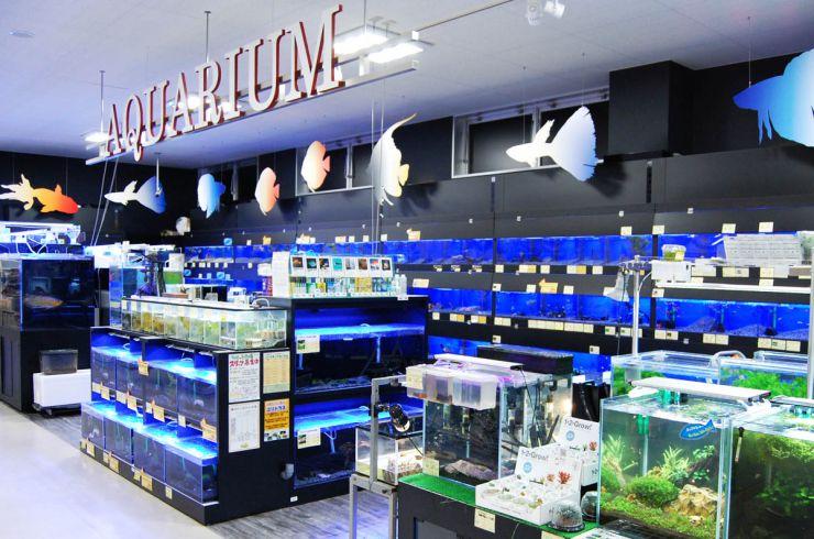 魚生体売場