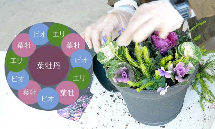 残りの植物を植える
