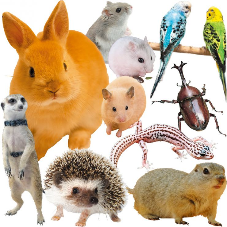 小動物爬虫類生体写真