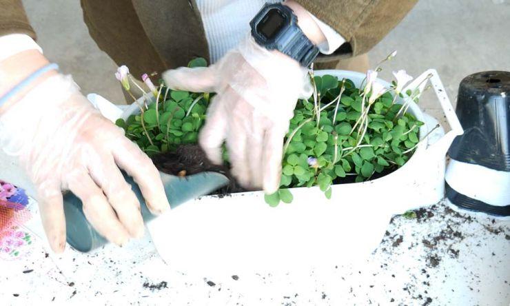 鉢の真ん中まで土を足す