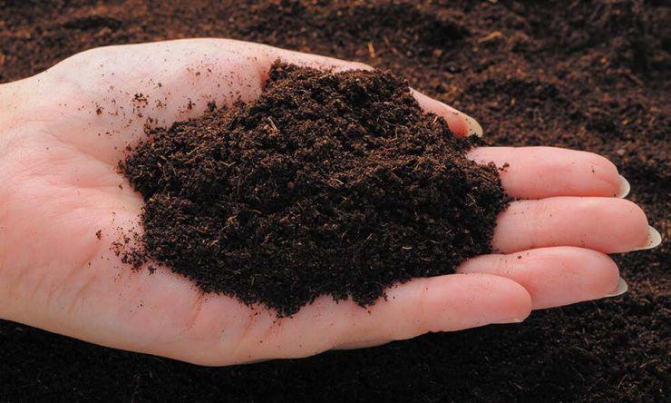 土・肥料選び