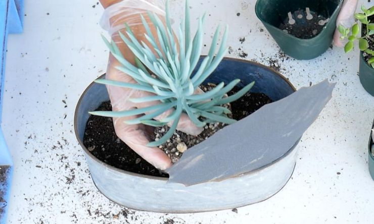 土量は鉢の1cm下