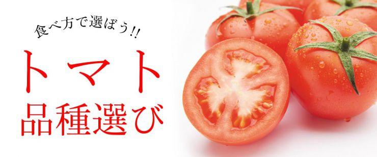 食べ方で選ぼう!トマト品種選び